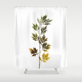 herbarium, natural Shower Curtain