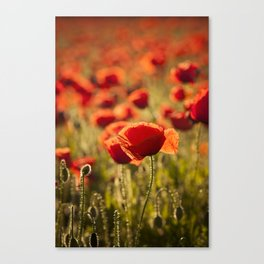 Poppies in LOVE - Poppy Flower Flowers Canvas Print
