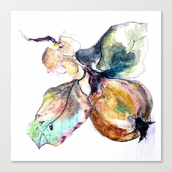 Study of a Pear Canvas Print