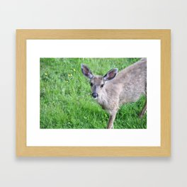 Young buck on the lawn 2 Framed Art Print