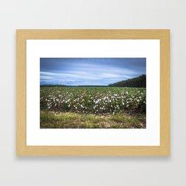 Cotton Fields  Framed Art Print