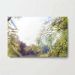 Leaves & Light Metal Print