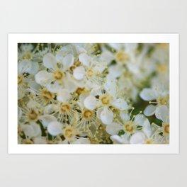 White & Yellow Art Print