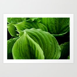 hosta la vista Art Print