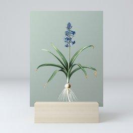 Vintage Scilla Patula Botanical Illustration on Mint Green Mini Art Print