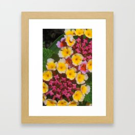 Small Yellow Tropical Flowers With Pink Buds Framed Art Print
