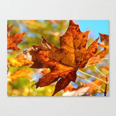 First Leaf of Fall Canvas Print