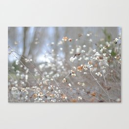 White berries in the winter Canvas Print