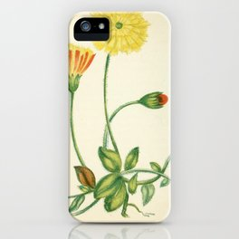 COMMON MOUSE-EAR HAWKWEED iPhone Case