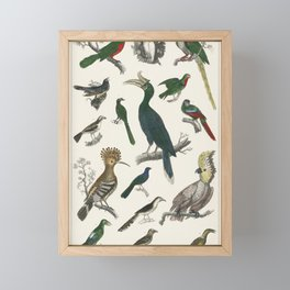 Exotic Birds and Parrots Framed Mini Art Print