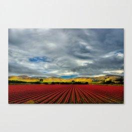 Marigold Field Canvas Print