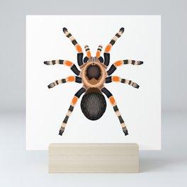 Red Knee Tarantula Mini Art Print