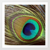 peacock feather Art Prints featuring Peacock Feather by Kim Bajorek