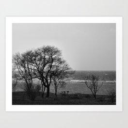 Coastal Trees in Monochrome Art Print