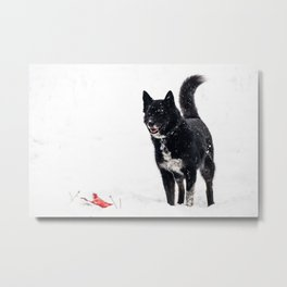 A game of fetch in the snow Metal Print