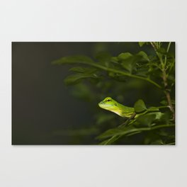 Asian Water dragon Canvas Print