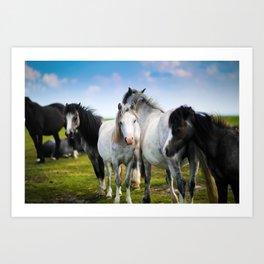 Horses Horses 4 Art Print