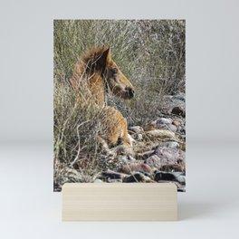 Salt River Foal Finding A Spot to Rest Mini Art Print