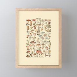 Trippy Vintage Mushroom Chart // Champignons by Adolphe Millot 19th Century Science Artwork Framed Mini Art Print
