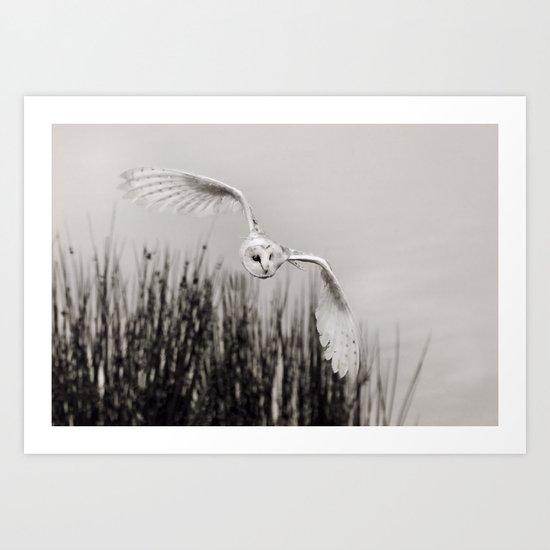 """Night Owl"" by roymcpeak"
