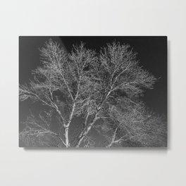 black and white photo of winter tree Metal Print