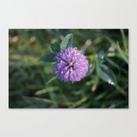 clover Canvas Prints featuring Clover by Bud M