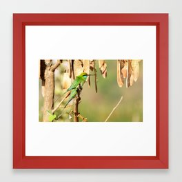 Little Green Bee-eaters Framed Art Print