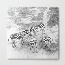 But Where Are the Zebras? Metal Print