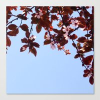 cherry blossom Canvas Prints featuring Cherry Blossom by madbiffymorghulis