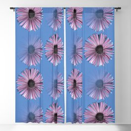 Urban daisy wearing street-cred stripes Blackout Curtain