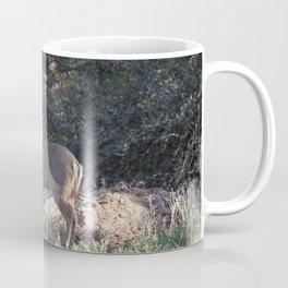 Deer in Tonto Natural Bridge State Park Coffee Mug