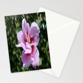 Double Headed Marsh Mallow Althaea Officinalis  Stationery Cards