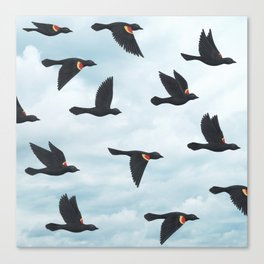 red-winged blackbirds and blue sky Canvas Print