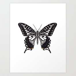 Asian Swallowtail Art Print
