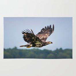 Immature Bald Eagle Rug