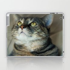 Kitty Cat Laptop & iPad Skin