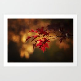 Red Maple Leaf Autumn Colors Photography Art Print