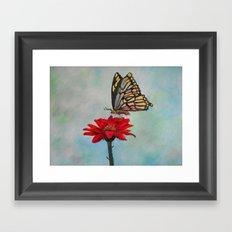 Swallowtail on a Red Gerbera Daisy Framed Art Print