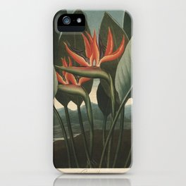 Henderson, Peter C. (d.1829) - The Temple of Flora 1807 - The Queen (Bird of Paradise Flower) iPhone Case