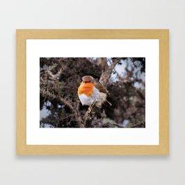 Robin Redbreast Framed Art Print