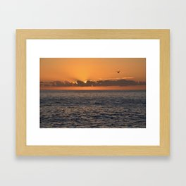 Jonathon Seagull Framed Art Print