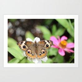 Beautiful Buckeye Butterfly Art Print