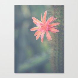 Little Cactus Flower Canvas Print