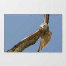 Red Kite Canvas Print