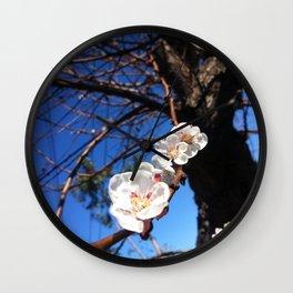Apricot Tree in Bloom Wall Clock