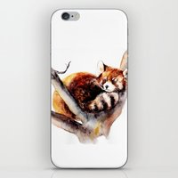 red panda iPhone & iPod Skins featuring Red Panda by Anna Shell