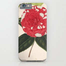 Flower camellia giardino santarelli8 iPhone Case