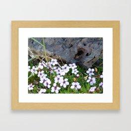 Volcanic flowers Framed Art Print