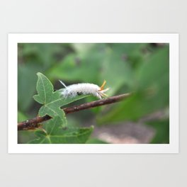 Fuzzy Caterpillar Art Print