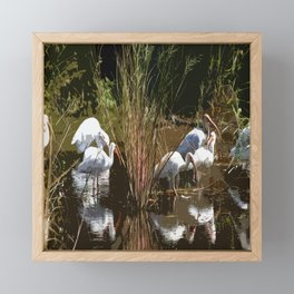 Meeting Pace In The Everglades Framed Mini Art Print